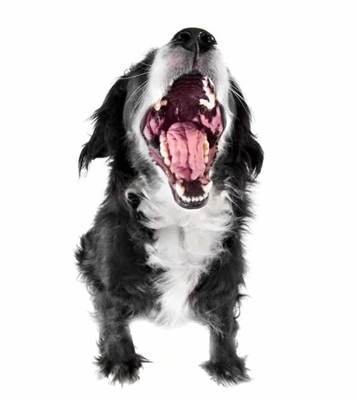springen hond afleren