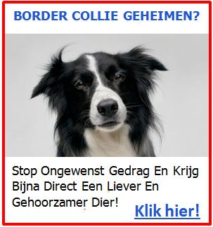 Baner 1 - Border Collie Geheimen